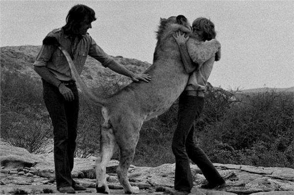 christian the lion hug